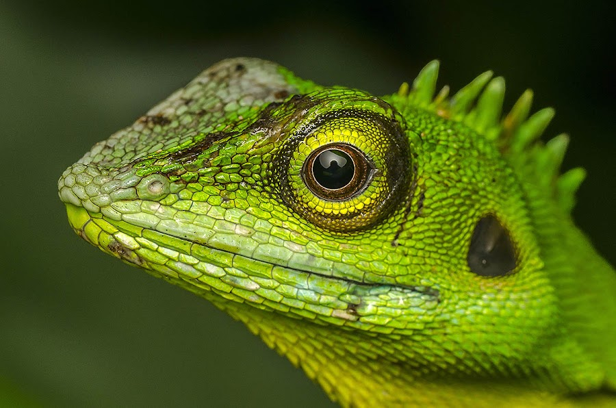 up close with you. by Marcus Kam - Animals Reptiles
