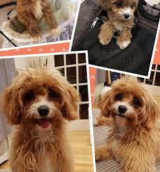 Testimonials | Blackberry Pups