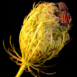 Flash on the panet by Gérard CHATENET - Nature Up Close Other plants