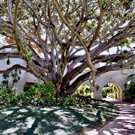 Tree and it's shadow  by Nelida Dot - City,  Street & Park  Historic Districts ( big, green, shadow, tree, entrance )