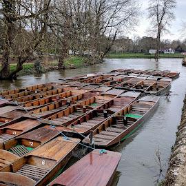 Botanical Gardens, Oxford by Vanda Kopányi - City,  Street & Park  City Parks ( oxford, boathouse, charwell, garden, botanical gardens, boats, river, park )