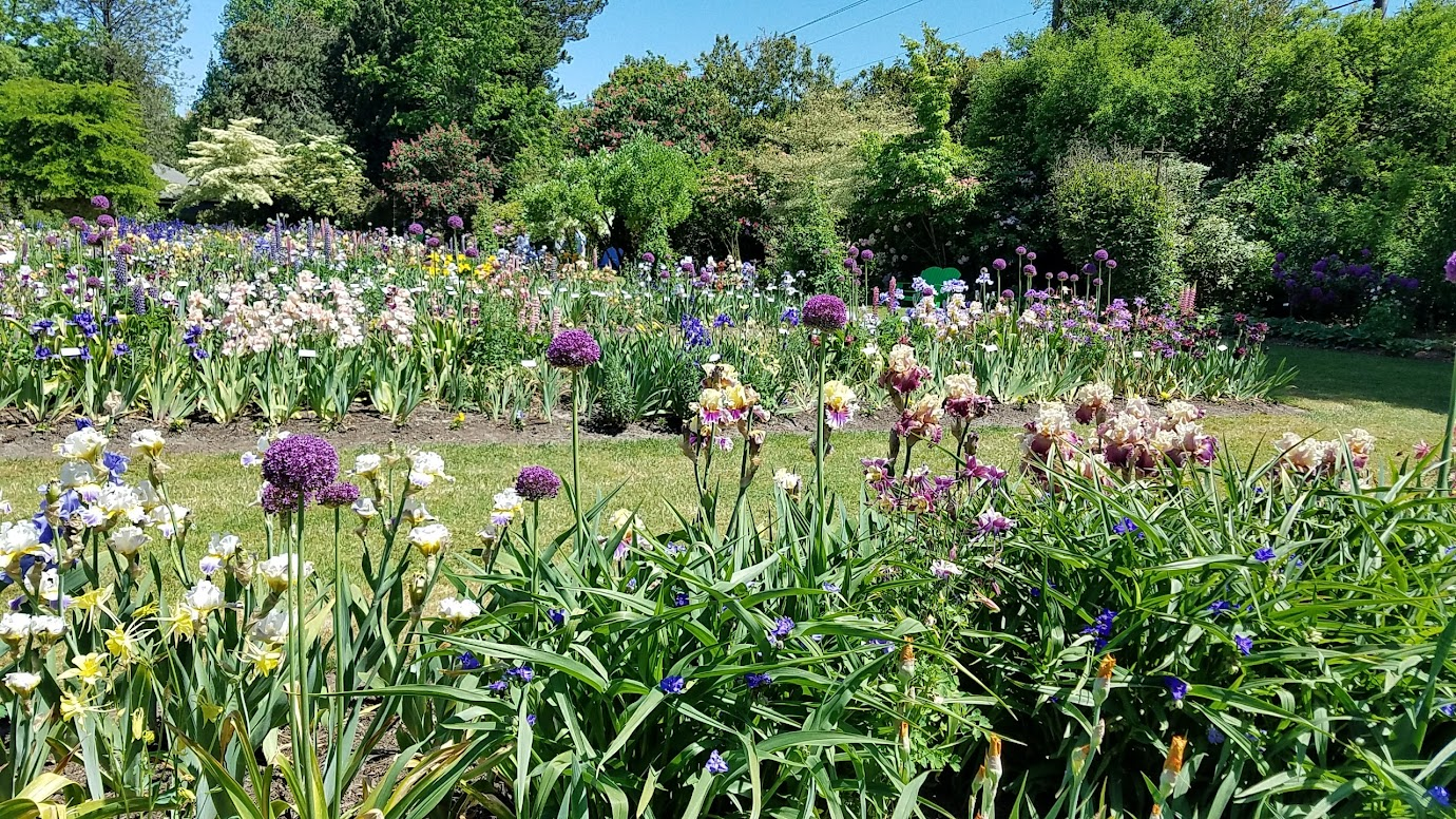Visiting Schreiner's Iris Gardens is easy, just an hour south of Portland, and is free - a great option if you are in Portland or Salem during their May bloom season