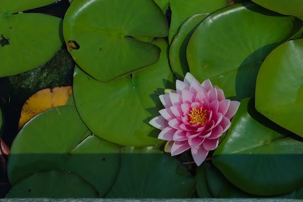 My flower di pluki07