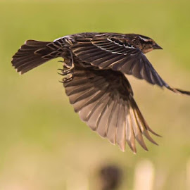 by Jessica Eirich - Animals Birds