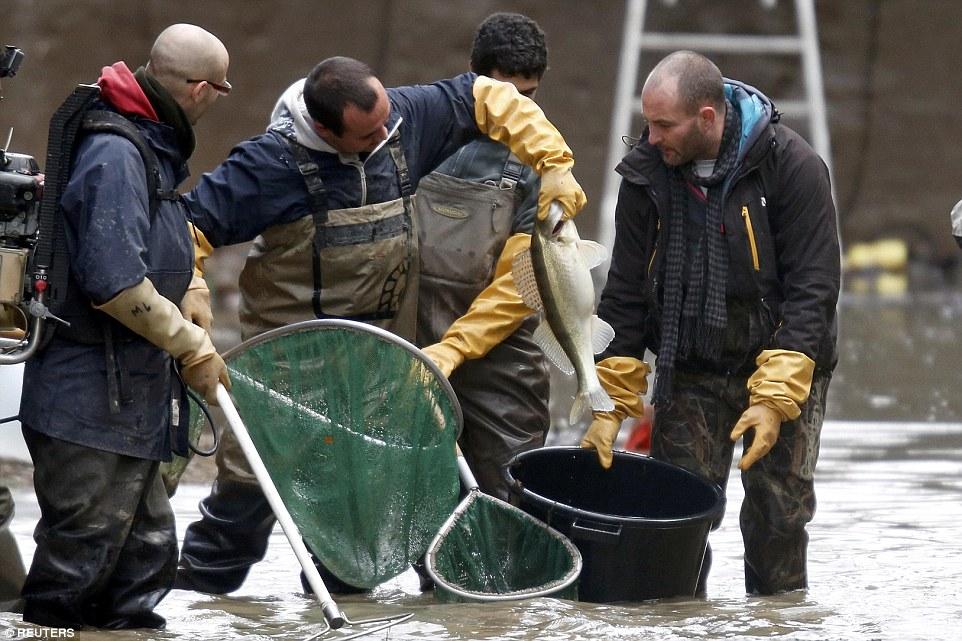 鉤,線和墜子:在聖馬丁運河在巴黎的排水過程中,工人們抓住一隻長梭魚