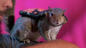 Squirrels Just Wanna Have Fun! thumbnail