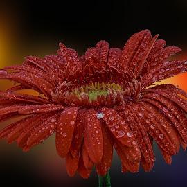 by Eseker RI - Flowers Single Flower (  )