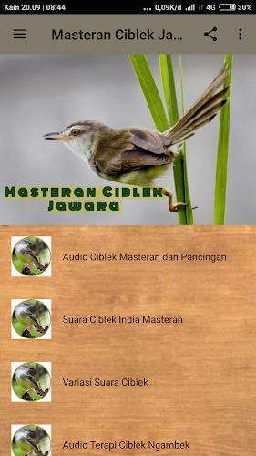 Download Masteran Ciblek Jawara Offline Apk Latest Version App By Argopuro Studio For Android Devices