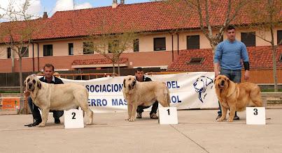 Photo: Ring ganadoras hembras - 2ª ENCINA DE BAO LA MADERA