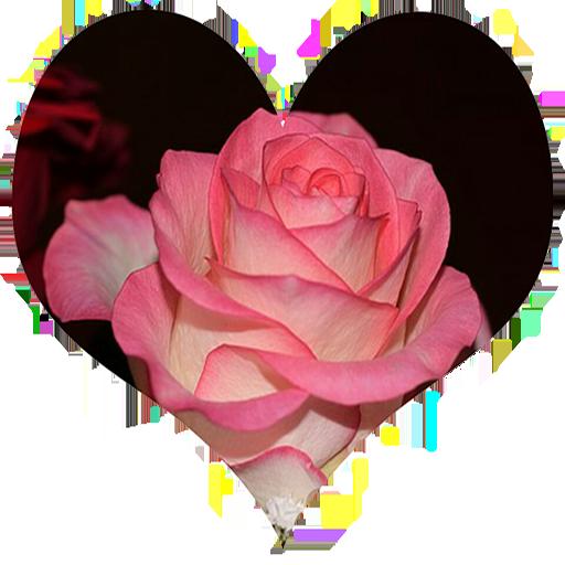 Rosas para mi amor