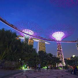 Garden by the Bay #2 by Mulawardi Sutanto - City,  Street & Park  Night ( singapore, bagus, night, garden by the bay, travel, park )