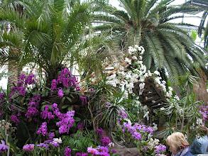 Photo: Wyspa Kwiatów