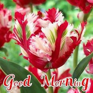 Good Morning Beautiful Flower V31
