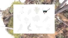 カユプテの木のおすすめ画像5