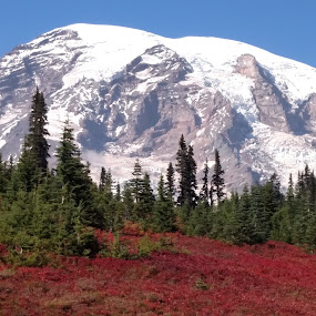 Mt.  Rainier by Greg Harcharik - Landscapes Mountains & Hills ( washington, mount, state volcano, rainier )