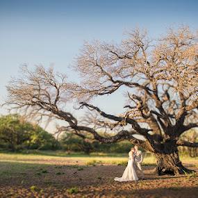 Tree of love by Valerie Meyer - Wedding Bride & Groom ( bonamanzi game park, kwazulu-natalrecus & almari, wedding byval meyer photography )