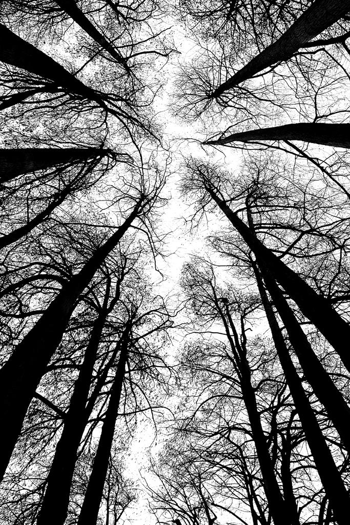Dark trees di Mullahomark86
