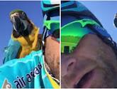 Franky, de papegaai van de betreurde Michele Scarponi, heeft met Antonio Nibali een nieuw maatje gevonden