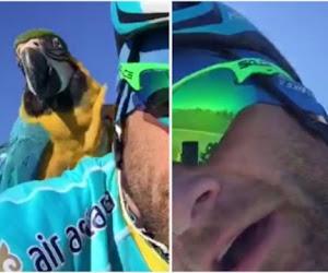 Populaire papegaai van betreurde Michele Scarponi heeft een nieuw maatje gevonden