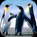 Penguin Sounds icon