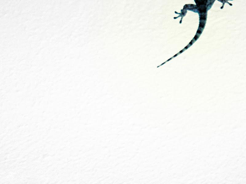 Geco di LucaLaurettiPH