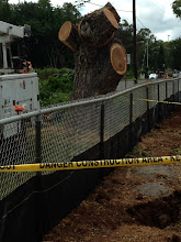Photo: This is the tree after all the remaining branches were removed.