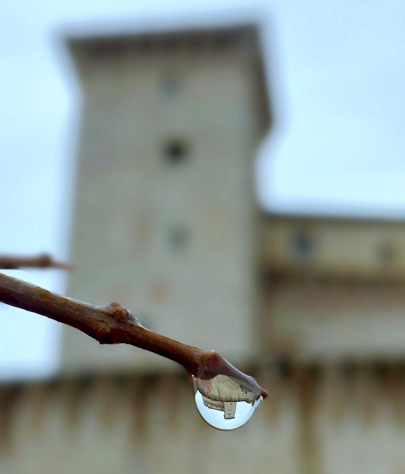 La goccia Flea  di francesco_scassellati