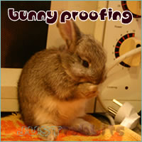 Bunny proofing your home is as easy as 1, 2, 3..