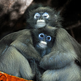 Cuddle with Mom by Andrea Everhard - Animals Other Mammals