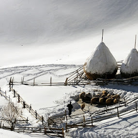 by Ionut Harag - Landscapes Travel ( person, winter, snow, fences )