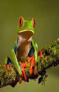 Frog Scratch Card for Kids screenshot 2