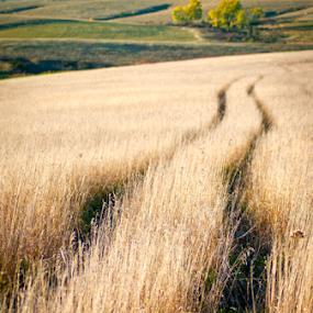 Wagon Ruts by Gayle Mittan - Landscapes Prairies, Meadows & Fields ( grass, wagon trail, wagon ruts, landscape, prairie, historic, pioneers, spring creek, field, grasses, natural, nebraska, evening, golden,  )