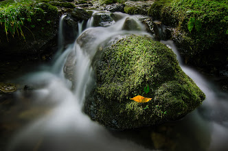 Photo: Autumn On The Rocks  As I've been pursuing photography more, I've realized how much I love nature and landscapes, so I've been looking for opportunities to focus more on that. Unfortunately, Tokyo is not exactly the best place for those kinds of images. However, there are some good locations if you know where to look. I took this on a hike around the Mt. Mitake area on Tuesday, which is technically in the Tokyo prefectural limits. This specific location is known as the Rock Garden - a large grouping of moss covered stones with a lovely, quiet stream flowing through them. Although the forest surrounding the stones was still mostly green, this fallen orange leaf heralds the season that is just around the bend.  Blog post: http://lestaylorphoto.com/autumn-on-the-rocks/  #japan #nature #travel #landscape #autumn