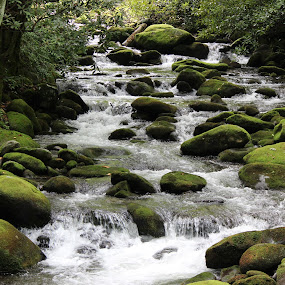 Mossy Creek by Heather Taulbee McIntyre - Novices Only Landscapes ( water, running water, peaceful, serene, creek, tennessee, moss, gatlinburg, rocks )