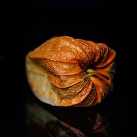 Psyhalis by Adrian Minda - Food & Drink Fruits & Vegetables ( orange, fruits, psyhalis, food, flower )