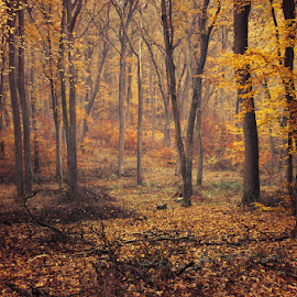 Fall Impressions IX. by Zsolt Zsigmond - Landscapes Forests ( forest, fall, nature, woods, autumn, trees, landscape )