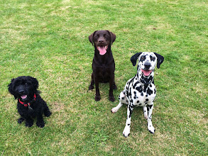 Photo: Monty Cockerpoo, Rupert Labrador, Molly Dalmation