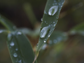 Photo: After the Rain