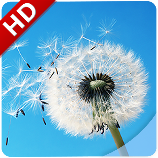 Wind Noise: Relax and Sleep file APK Free for PC, smart TV Download