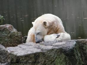 Photo: Knut doest auch ;-)