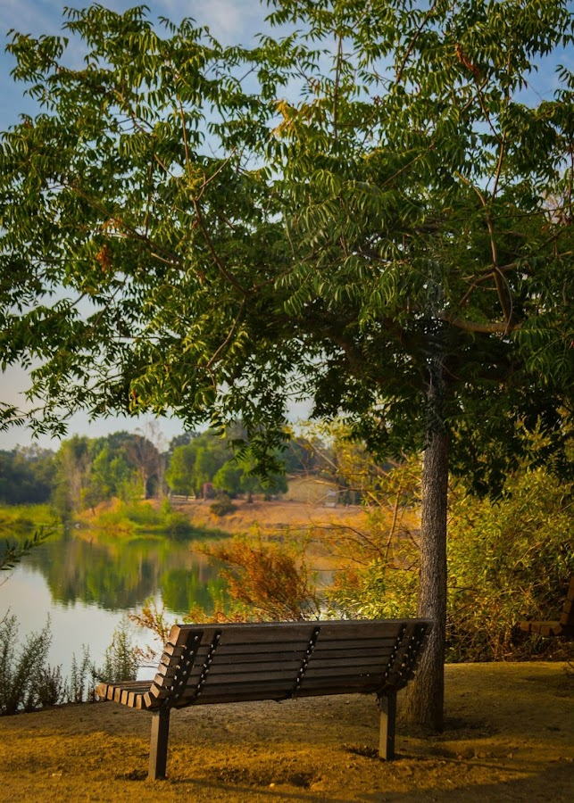 By the lake by Idel Richter - City,  Street & Park  Neighborhoods (  )