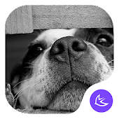 CUTE DOG-APUS Launcher theme