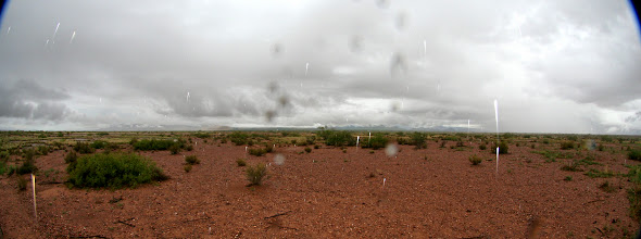 Photo: Chiricahua mountains in the rain.