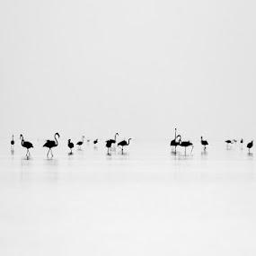 Lesser Flamingos by Bhavya Joshi - Animals Birds