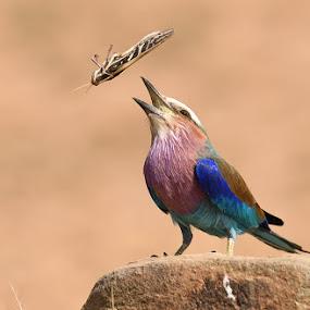Lunch Time by Andrew Morgan - Animals Birds ( bird, serengeti, food, safari, action, eating, wildlife )