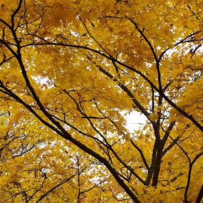 Yellowood by Filip Caric - Nature Up Close Trees & Bushes ( croatia, zagreb, ribnjak )