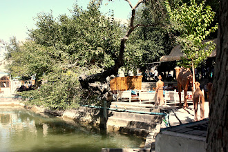 Photo: Day 163 - Pool in Lyabi-Hauz in the Old Town #2