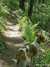 Photo: ORR trail