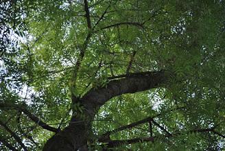 Photo: Un écureil se cache dans cette image, saurez-vous le retrouver ?