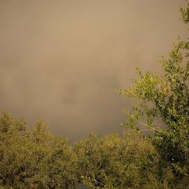 by Denise O'Hern - Landscapes Weather